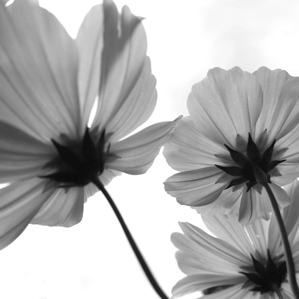 Blumen, Hamburg, Flotbek